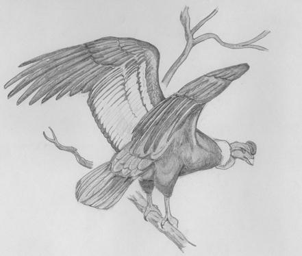 Dibujos De Coleccion [Propios] - Taringa!